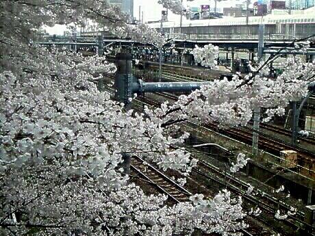 桜からのぞく線路